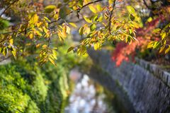 Philosopher's Path in Kyoto, Japan Royalty Free Stock Photos