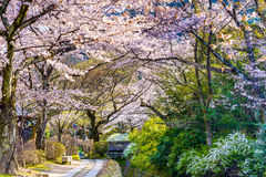 Philosopher's Walk in Kyoto Stock Photography