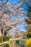 Philosopher's Walk in Kyoto. Kyoto, Japan at Philosopher's Walk in the Springtime Royalty Free Stock Photos