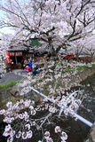 Philosopher's Walk,Kyoto Royalty Free Stock Photography