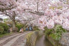 Philosopher`s Walk with sakura cherry blossom Royalty Free Stock Photos
