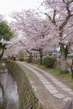 Philosopher`s Walk with sakura cherry blossom Royalty Free Stock Images