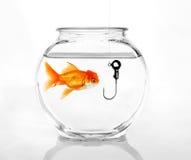 Phishing zu Information Lizenzfreies Stockfoto