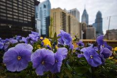 Phlowers в Philly Стоковое Изображение RF