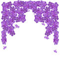 phlox рамки цветка Стоковая Фотография