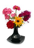 Phlox. Beautiful flowers in a black vase on a white background Stock Photo