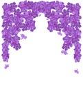 Phlox da flor um frame. Fotografia de Stock