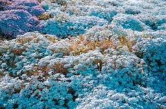 Phlox flower field. Bright summer background stock photo