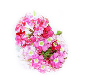 Phlox fresh pink flower on white background, photo manipulation Stock Images