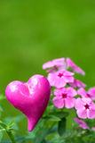 Phlox with heart Stock Images