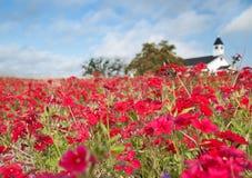 Phlox rouge et église blanche Image stock