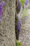 Phlox subulata - Purple Beauty flowers, Switzerland. Stock Photos