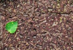 Pho在地板褐色的树叶子 免版税库存图片