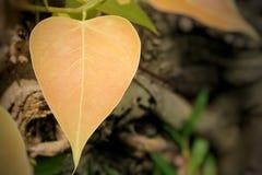 Pho est le symbole du bouddhisme en Thaïlande photos stock