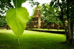 Pho Lub Bodhi liść, Pho liście i interliniuje plecy budynek zdjęcie royalty free