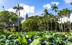 Pho Minh Temple Royalty-vrije Stock Fotografie