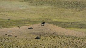 Phobjikha谷 不丹王国 库存图片