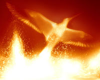 Phoenix. Flaming phoenix on a bright red background Royalty Free Stock Photo