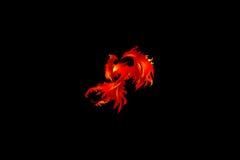 phoenix vektor illustrationer