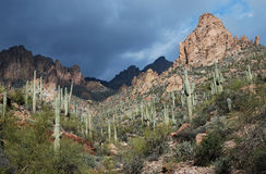 Phoenix, Arizona. Apache Trail scenery Royalty Free Stock Images