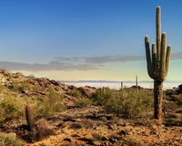 Phoenix Arizona Desert in Morning. Scenic view of Phoenix Arizona desert in morning from South Mountain hiking trail with saguaro cactus royalty free stock photos
