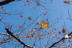 Phoenix-Baum Lizenzfreie Stockbilder