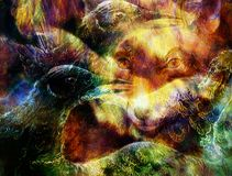 The phoenix bird  and fox collage. Stock Images