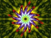 Phoenix bloom Stock Image