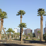Phoenix downtown as seen from Encanto Park Lake, AZ Royalty Free Stock Images