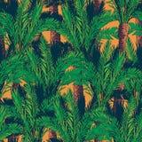 Phoenix drzewka palmowe na pomarańczowym tle Obrazy Stock