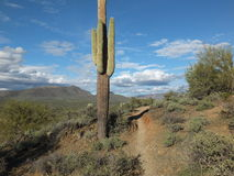 Phoenix Hike. Hiking path through the Sonoran Desert near Phoenix royalty free stock photography