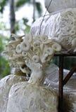 Phoenix mushroom or Indian Oyster mushroom Stock Image