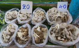 Phoenix Oyster Mushroom. Group of Phoenix Oyster Mushroom in street market at Thailand Royalty Free Stock Images