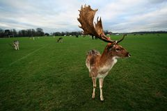 Phoenix park royalty free stock photos