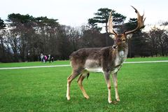 Phoenix park royalty free stock images