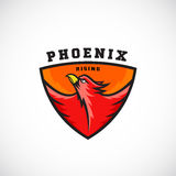 Phoenix Rising Abstract Vector Logo Template.  Stock Photos