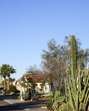 Phoenix Streets on Warm Winter Day Stock Images