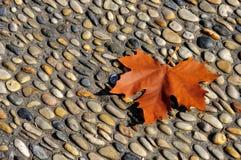 Phoenix tree red leaf Stock Photo