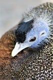 Phoenix-Zoo, Arizona-Mitte für Erhaltung der Natur, Phoenix, Arizona, Vereinigte Staaten Lizenzfreie Stockfotografie