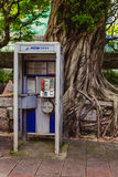A phone booth in front of a large rooted tree. Stock Image