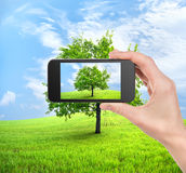 Phone and tree Royalty Free Stock Image