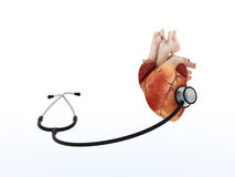 Phonendoscope listens to human heart. Phonendoscope listens to real heart on white background. Medical care, help and treatment concept. Can be used for Royalty Free Stock Photos