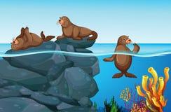 Phoques vivant en mer illustration stock