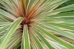 Phormium植物 免版税库存图片
