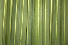 Phormium Leaf Background Stock Photography