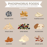 Phosphorus foods, food info graphic, vector Royalty Free Stock Images