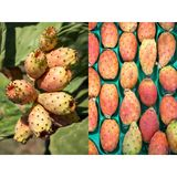 2 phothos collage of ripe prickly pear cactus fruits. Stock Images