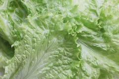 Photo étroite de fond vert avec de la laitue images stock
