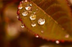 photo Photo libre de droits