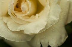 photo Photo stock